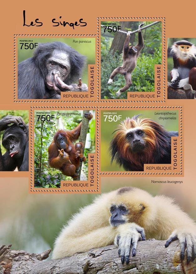 TG 14516 aMonkeys (Pan paniscus, Hylobates Iar, Pongo pygmaeus, Leontopithecus chrysomelas, Nomascus leocogenys)