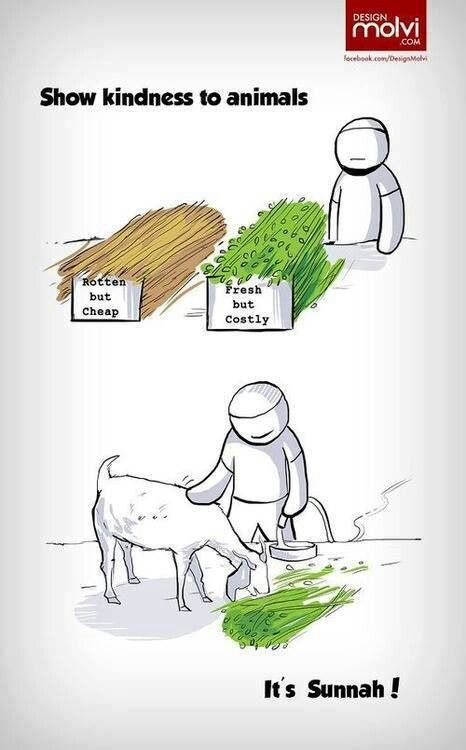 Show kindness to animals.