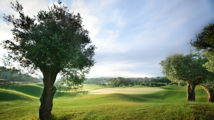 Olive groves and golf challenges-Costa Navarino Resort
