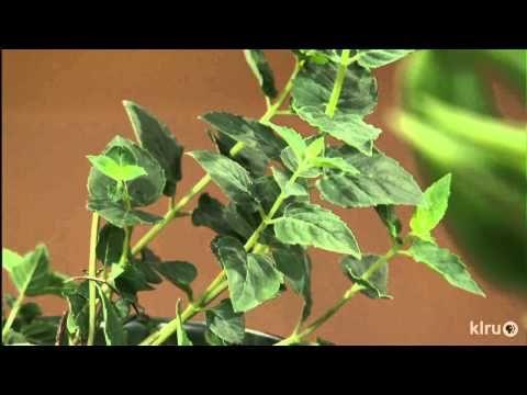 Videos - Hill Country Water Gardens Serving: Austin, Cedar Park ...