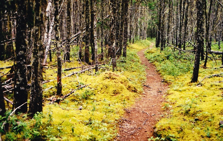 Forest trail in Terra Nova National Park #ExpediaThePlanetD
