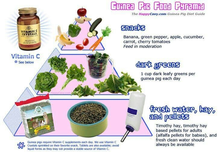 Guinea Pig Food Pyramid.- I would move bell peppers to daily, but this is a helpful chart to simplify feeding!