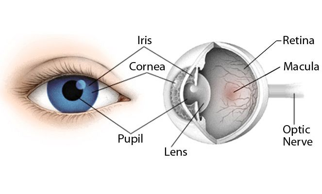 What is the cornea? The cornea is depicted as the reasonable and straightforward film of the eye that covers the front surface of our eyes. This piece of the eye is likewise very solid and flexible. The tear creation and tear liquid from the eyes gives the cornea insurance from bacterial diseases, germs and infections.                                              http://corabuckleyblog.blogspot.com/2017/05/the-function-of-cornea-in-sugar-land.html