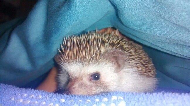 Un intruso pinchudo en la cama