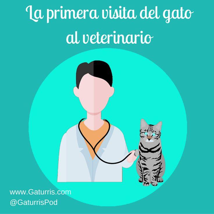 En el podcast de esta semana contamos con Gabriel Giner, veterinario del Consultorio Veterinario Lajares con el que hablamos sobre la primera visita de nuestro gato al veterinario.  ¿Cómo debemos prepararlo para la primera consulta?¿Cuándo es conveniente llevarlo?¿Qué revisará el veterinario en esta primera visita? Escucha nuestro programa para resolver estas y otras cuestiones: http://www.gaturris.com/podcast/10-la-primera-visita-del-gato-al-veterinario