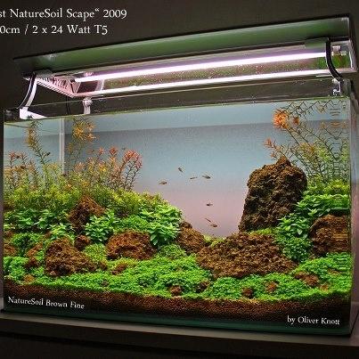 Beautiful aquarium world