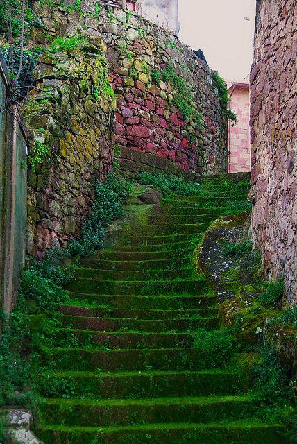 moss stairs. Sardinia, Italy