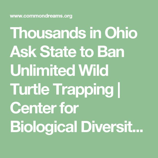 Thousands in Ohio Ask State to Ban Unlimited Wild Turtle Trapping | Center for Biological Diversity | Common Dreams