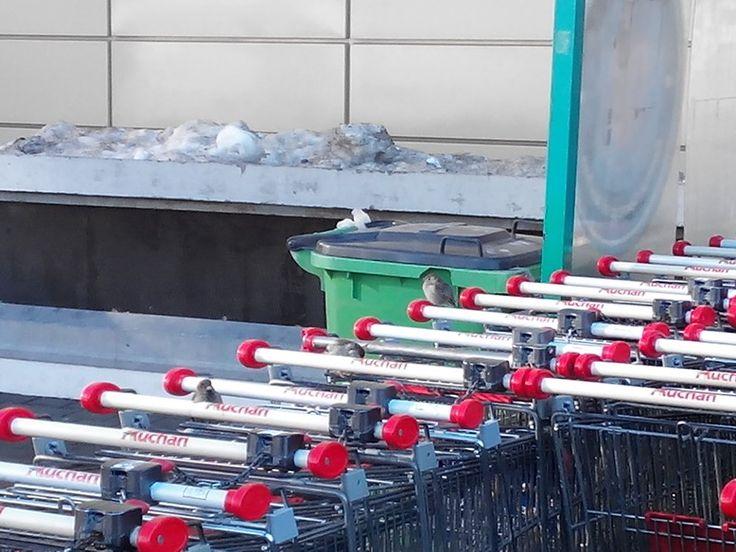 Pasari plecand de la supermarket - Birds leaving a supermarket