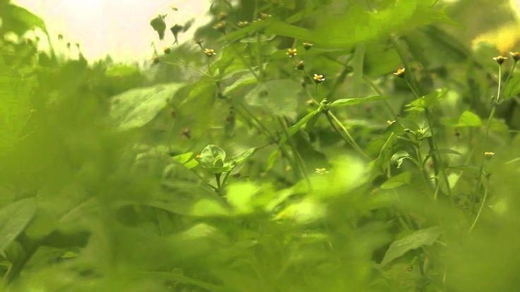 Under Deep Green