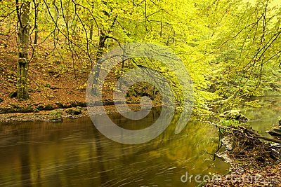 Fall foliage on display in forest along banks of river on sunny day.