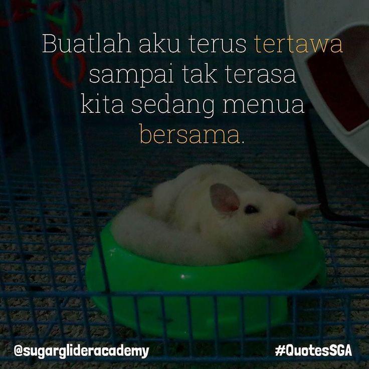 Make me laugh till we grow old together. . Healty Gliders can live more than 10 years.  Sugar Glider yang sehat bisa hidup lebih dari 10 tahun. . Order Produk SGA?  WA : 087739151147  BBM : 7650E8FB  Line : sugarglideracademy .  #sugarglider #sugarglideracademy #sugarglideronlineshop #sugargliderindonesia #sugarglidermalay #sugargliderthailand #motivasi #quotessga #jualsugarglider #フクロモモンガ #sugargliderjakarta #sugargliderofinstagram #exoticpet #indoexoticpets #kpsgi #kpsgijakarta…