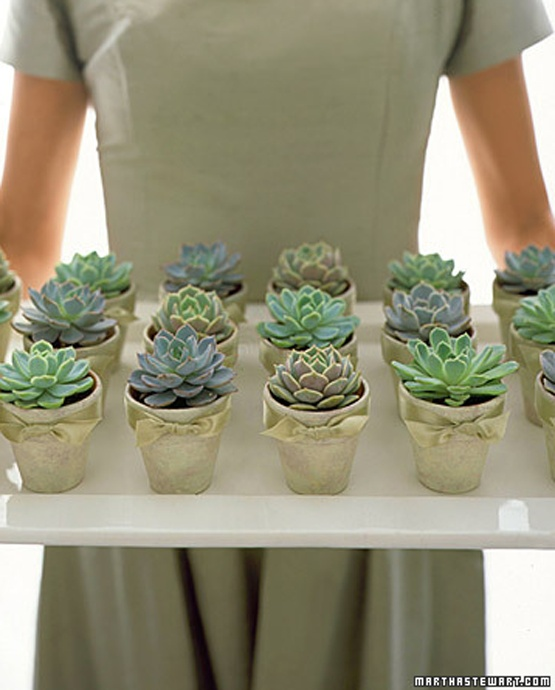 succulents... love the mini & colors!