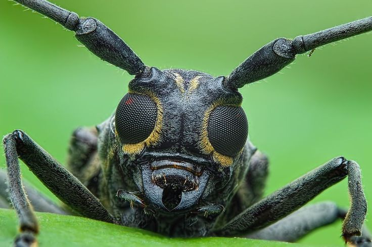 9 Fun Beetle Facts. - Random Facts