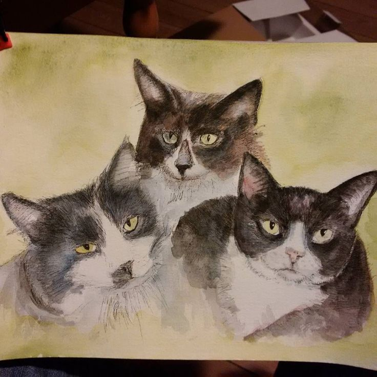 Most recent progress shot of the three #kitties #commission. Read about my #art at http://tclausen.net #drawing #pen #catsofinstagram #catstagram #petstagram #portrait #petart #petsofinstagram #twitter #watercolor