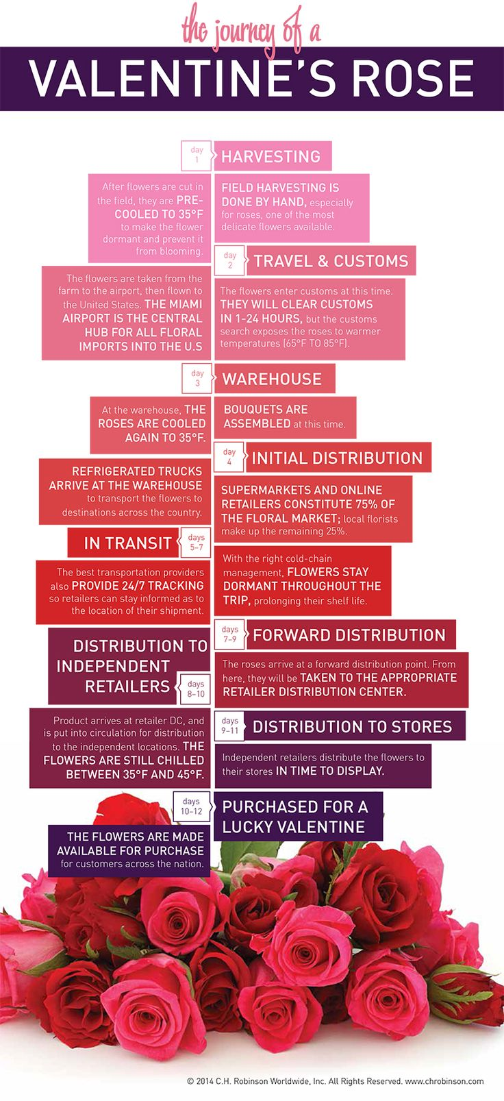 Infographic showing the supply chain journey for a rose sent on Valentine's Day