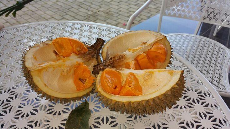 Pampakin, buah #durian khas KalSel