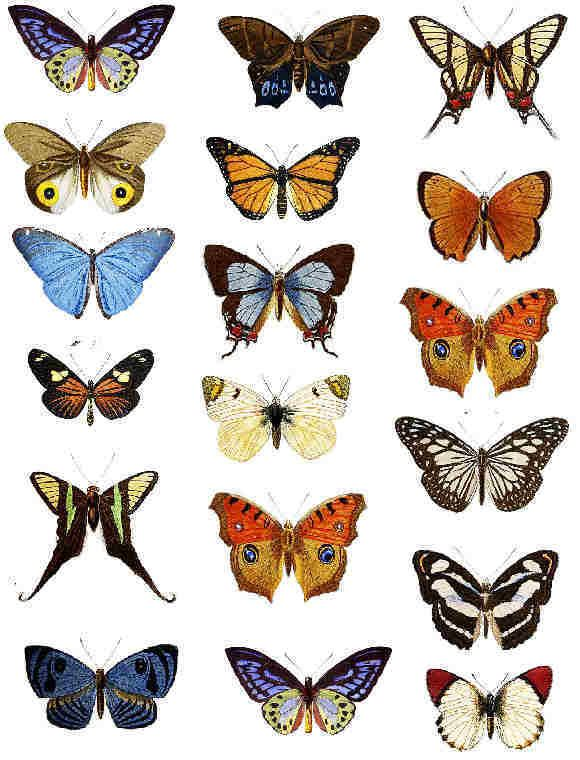 1000+ images about Printables {Butterfly} on Pinterest | Scrapbook ...