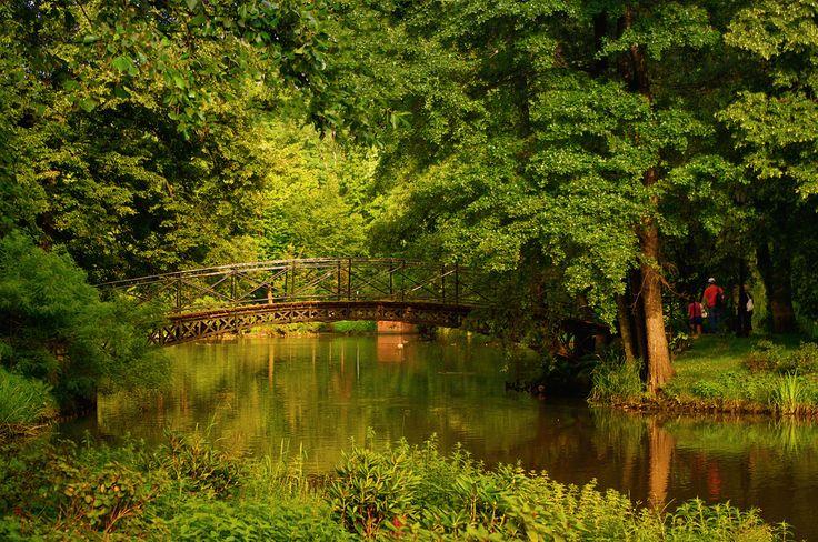 Pictografio: On Golden Pond Pszczyna