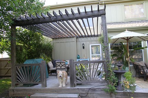Shady Places; Pergola Update; Anything Pretty