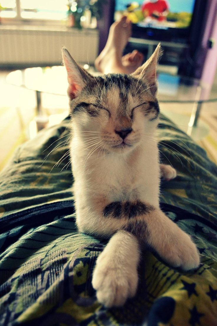 1000 Images About Sleeping Kittens Amp Cats On Pinterest