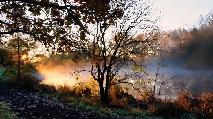 Rzeka, Drzewa, Mgła
