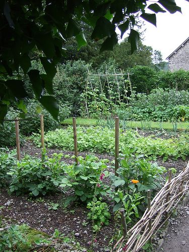 Beatrix Potter's Garden: rabbits run freely among the plants, and their many warrens are on the hillside beyond