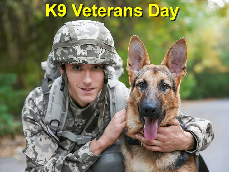 K9 Veterans Day http://localvalue.vet/wp-content/uploads/2017/02/K9-Veterans-Day.jpg Let's Join Hands To Commend the Bravery of our Canine Friends.    http://localvalue.vet/social-media/k9-veterans-day/