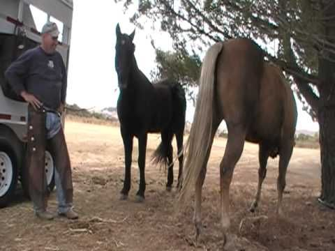 Buying a horse - Things to look for - How to buy a horse - Rick Gore Horsemanship