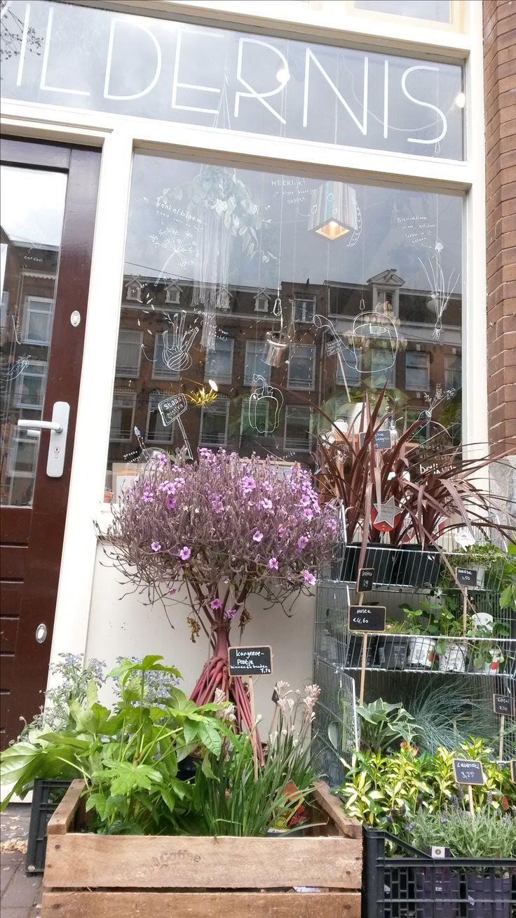 Wildernis - succulent plant pot shopping pleasure