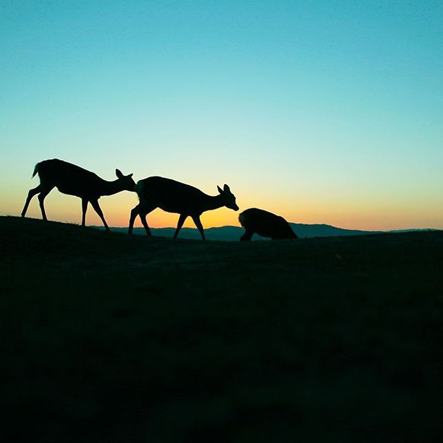 【kazuto.photography】さんのInstagramをピンしています。 《No.314 パントマイムのエスカレーターを3頭で練習しているようでした。笑  #秋 #deer #鹿  #動物 #癒し #nara #奈良#Photo #写真 #癒し系 #若草山  #silhouette #photographer #narapark #奈良公園 #光 #森 #淡い #自然 #木 #tokyocameraclub #team_jp #team_jp_西 #instagramjapan  #bestjapanpics #ig_japan #loves_nippon #lovers_nippon  #instagood #instagram》