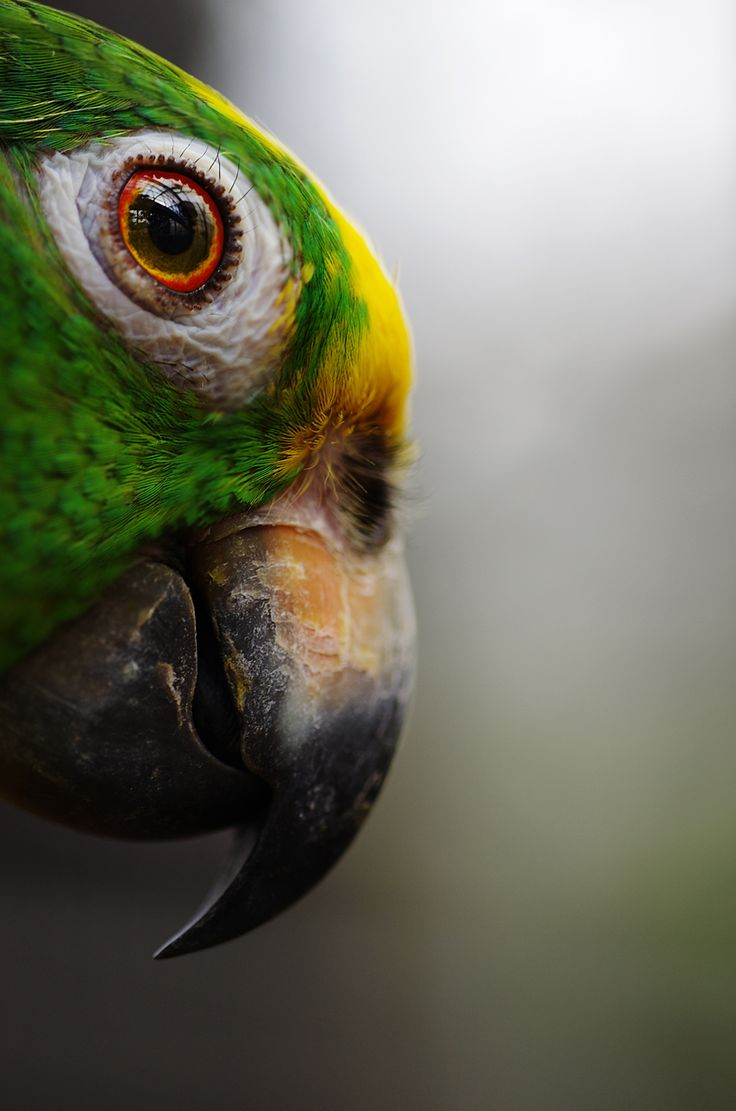 Parrot ... have to confess it's the first time I notice the eyelashes