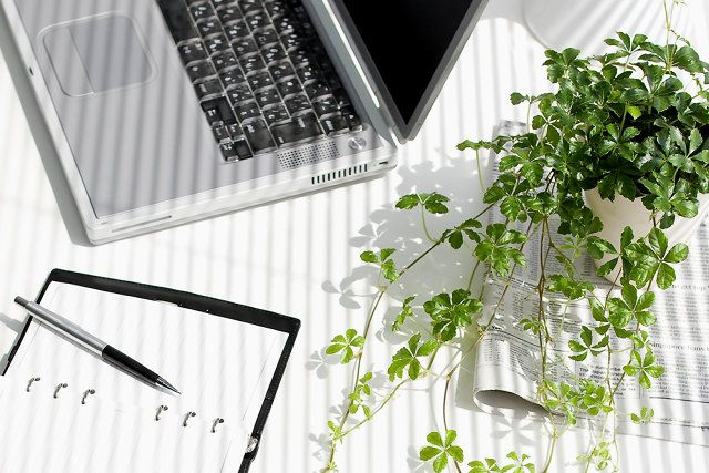 Want To Be More Productive? Buy Some Desk Plants
