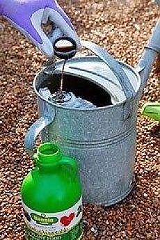 ВЕСЕННЯЯ ПОДКОРМКА ЗЕМЛЯНИКИ (КЛУБНИКИ)  На 10 л воды - 3 г марганцовки, 0,5 ч.л. борной кислоты, 1ст.л. мочевины, 0,5 стакана золы. Всё хорошенько перемешать. На большой куст - 1л.