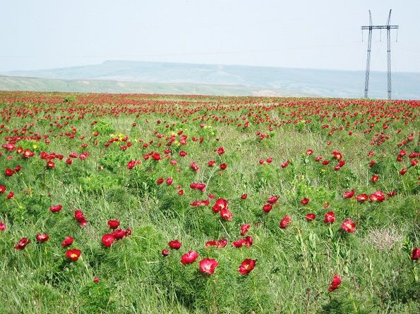 Штраф 5000 рублей за цветок