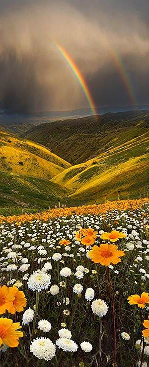 CALIFORNIA - storm rainbow landscape amazing #photo by fereshte faustini #flowers sky clouds mountain nature beautiful
