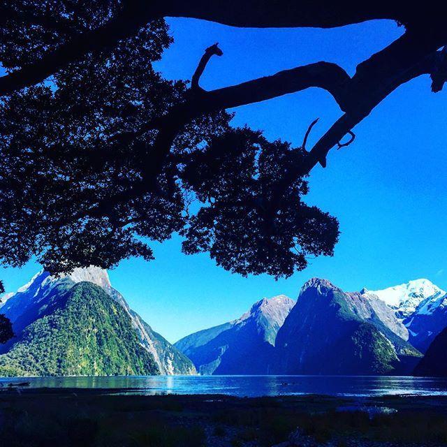 #milfordsound #milford #sound #nz #newzealand #water #mountains