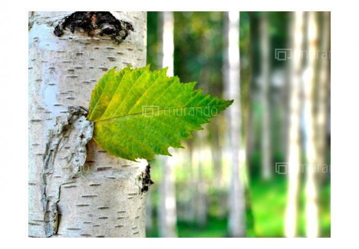 Přírodní motivy | Čistá příroda - les | Luxusní 3D fototapety a tapety na zeď.