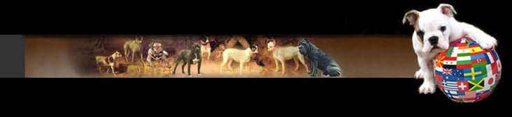 Shepherd Dogs and wolf-like dogs #wolf #shepherd #hybrids, #wolf #dog #hybrids, #german #shepherd #dog, #wolflike #dogs, #belgian #shepherd #dogs, #belgian #sheepdogs, #utonagan, #tamaskan, #kunming #dog, #belorusian #shepherd, #byelorussian #ovcharka, #saarloos #wolfdog, #czechoslovakian #wolfdog, #american #tundra #shepherd, #saarloos #wolfhound, #lupo #italiano…