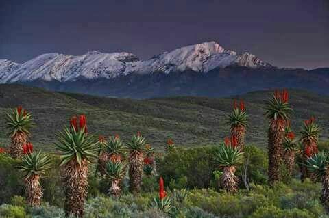 Swartberge, Oudtshoorn, Eastern Cape. Snowed in the mountain 17 July 2017