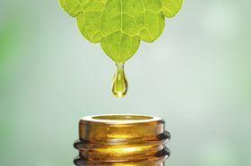 Homeopatie funguje, tvrdí francouzský výzkum. Je to placebo, trvají na svém lékaři