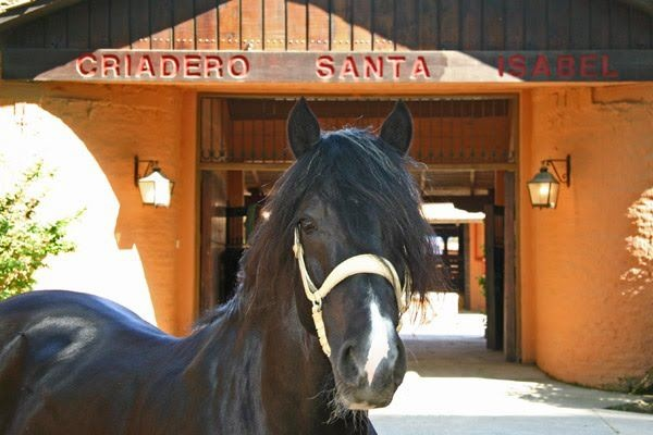 1893 Best Images About Bakery On Pinterest: 17 Best Images About CABALLOS On Pinterest