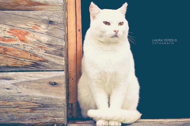 Pandora  Laura Yepes A. Fotografía ©  www.facebook.com/LauraYepesArandaPh
