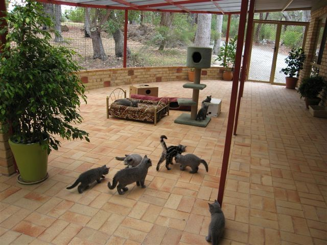 Outdoor Cat Rooms And Areas | Cat Enclosures: A Safe Outdoor Heaven For Cats