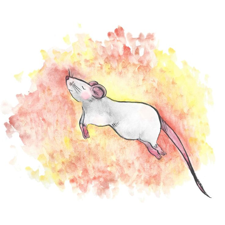 Fundraiser Promotion — The Busy Rats Store
