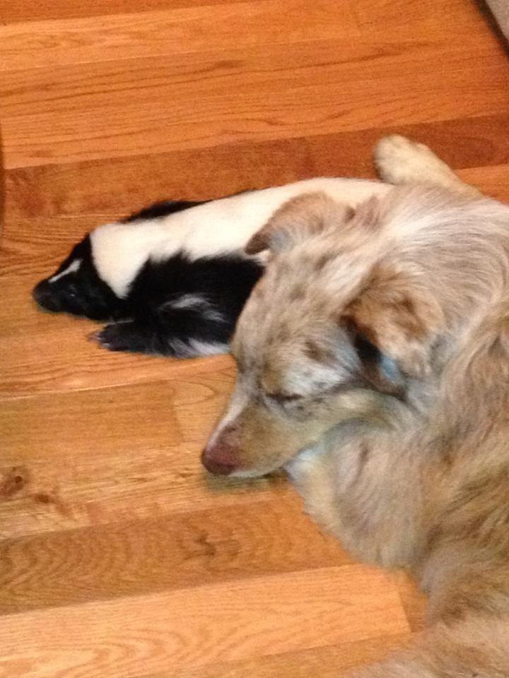 Best Way To Wash Skunk Off A Dog