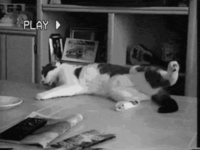 7 Best Cat Gifs of the Week – 3rd November 2015 - We Love and Kittens