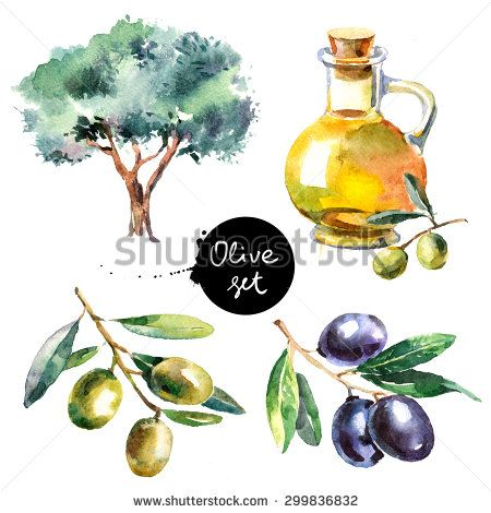 olives watercolour - Google Search