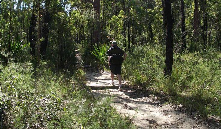Bush walker on the Karloo track. Photo: Andy Richards