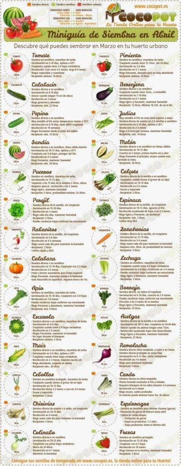 Qué sembrar en abril? Tomates, calabacín, pepino, sandía, puerros, perejil, rábanos, auyama, apio, escarola, maíz, cebolla, chirivías, colinabo, pimiento, berenjena, melón, judías, cebolla, espinaca, zanahorias, lechuga, borraja, acelgas, remolacha, cardos, espárragos y fresa.